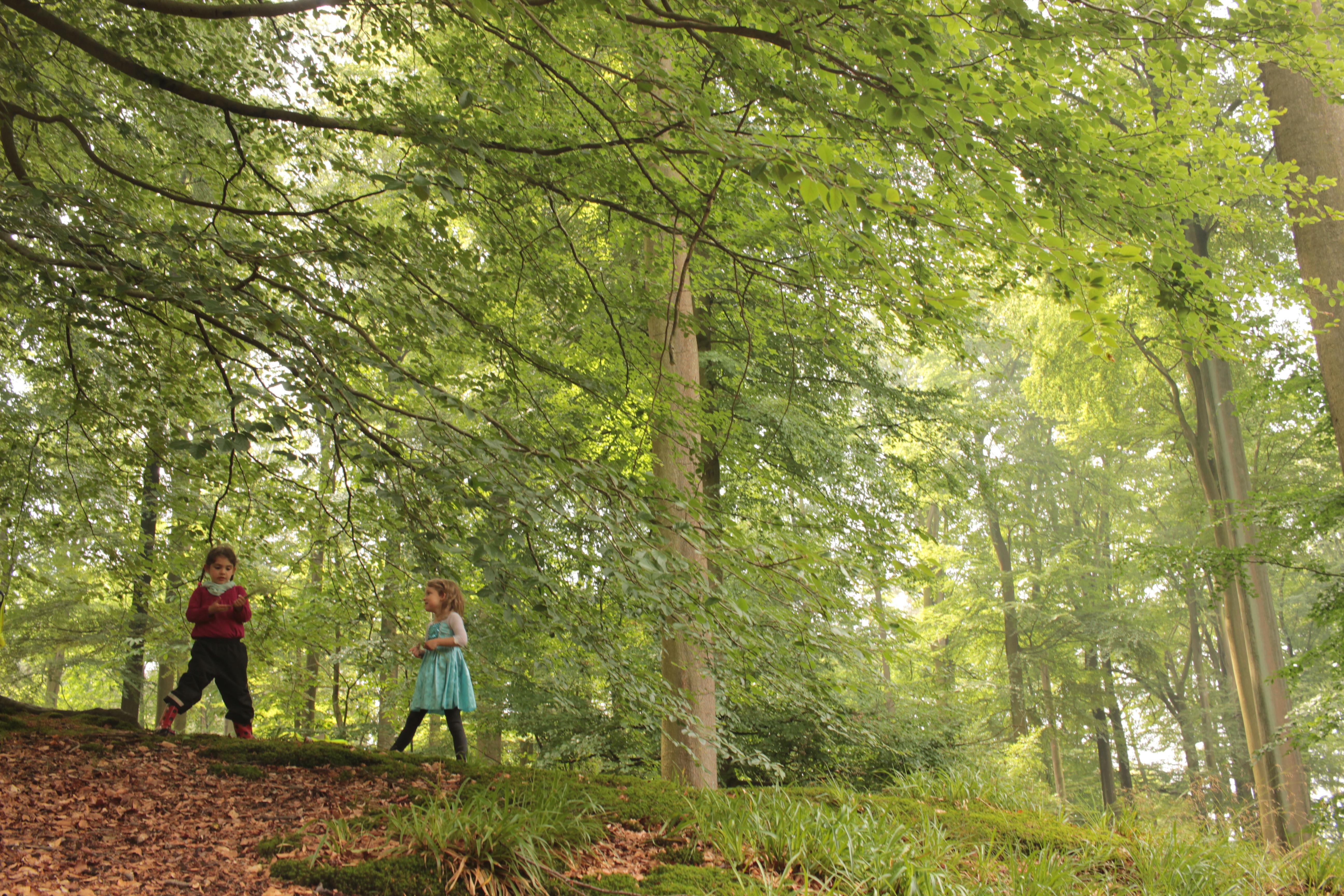 Brussels outdoor school , kids in the woods